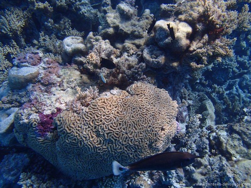 iles cook aitutaki coraux