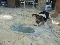 chien peche carangue bora bora