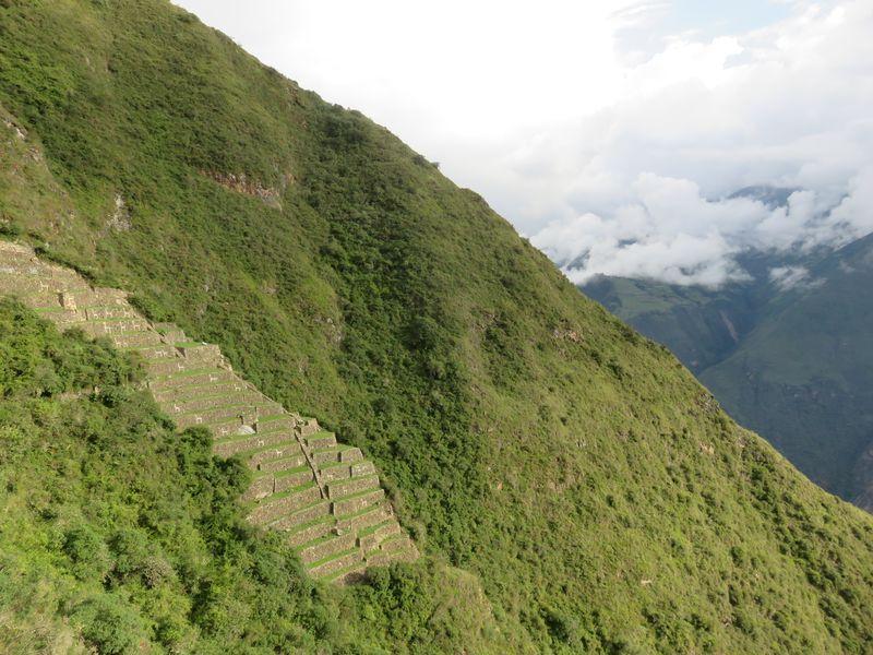 secteur 9 - llamas terrasse - choquiquerao