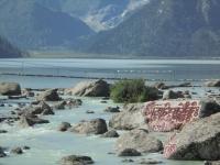 xinluhai-lac-tibet-gros-plan