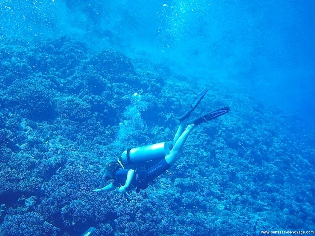 plongeur fakarava requins