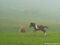 3-mykines-chevaux (1)