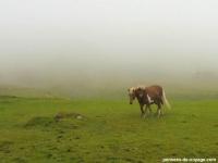 3-mykines-chevaux (2)