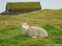 4-mouton-maison