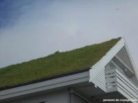 toit-herbe-oiseau-feroe
