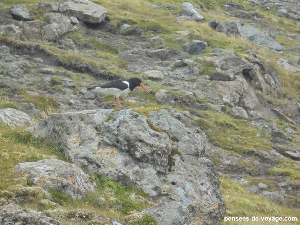 vidoy-randonnee-sommet- Villingardalsfjall (7)