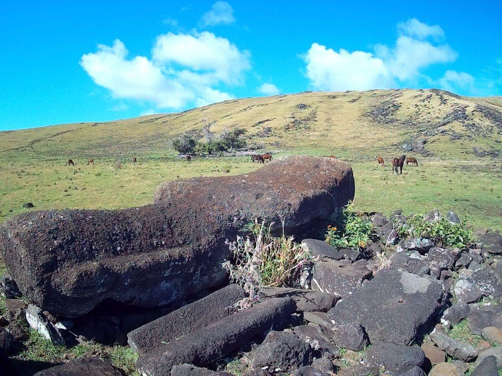 cote ouest ile de paques moai et chevaux