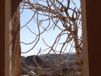 kharanaq arbre et fenetre