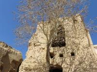 adobe arbre et maison en ruine