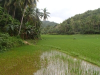 riziere bohol