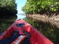 kayak dans la mangrove de conception