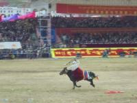 cheval-au-galop-yushu-2017 (4)