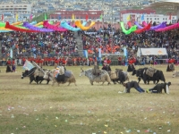 yaks-ceremonie-ouverture-2017-yushu