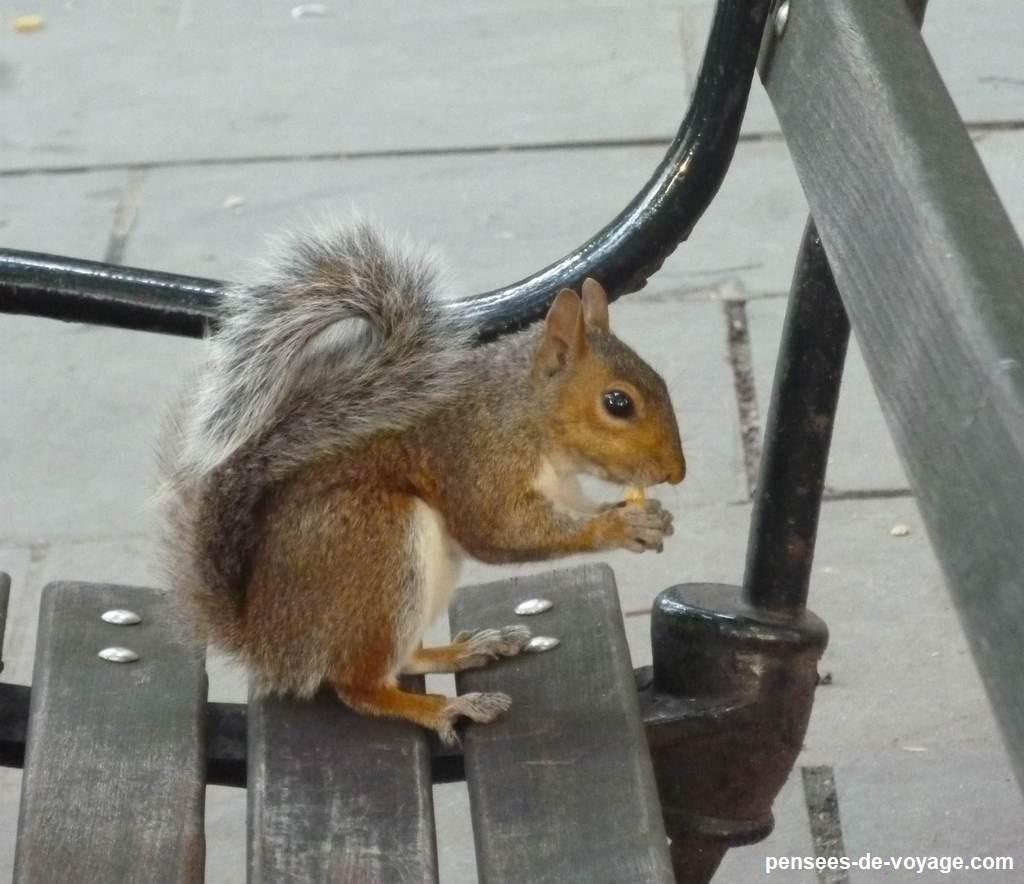 Ecureuil sur un banc New York