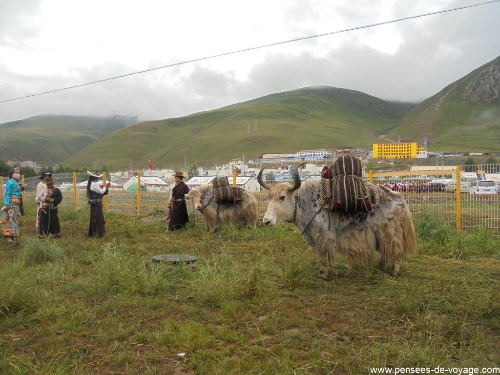 yak festival yushu 2017