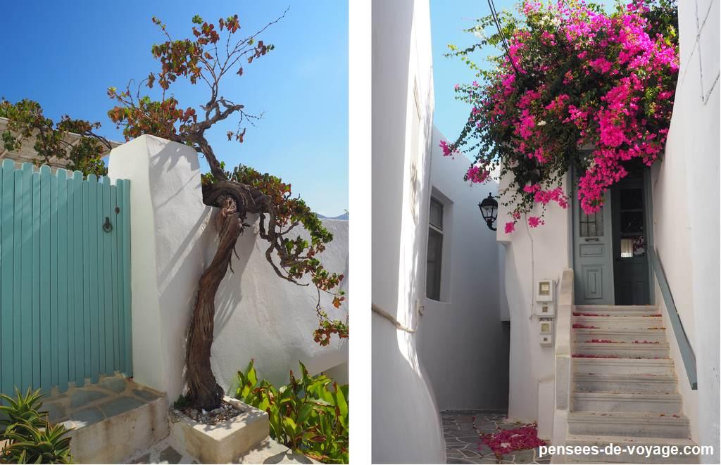 cyclades fleur sur maison