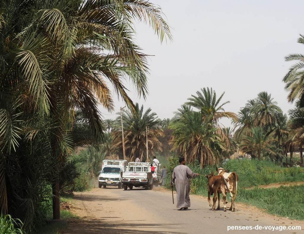 la route du marché au chameaux