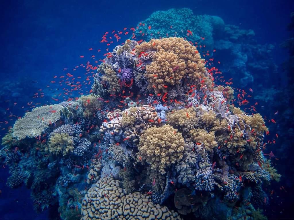 coraux et poissons à Marsa Alam