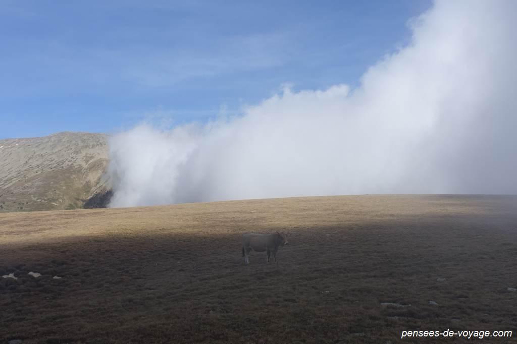 Brouillard sur la randonnée du Pla Guillem