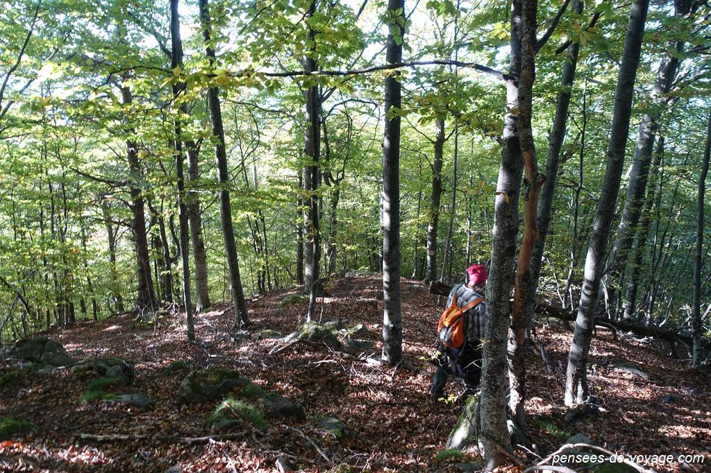 Descente dans la forêt en direction du Col de Jou en suivant les marques