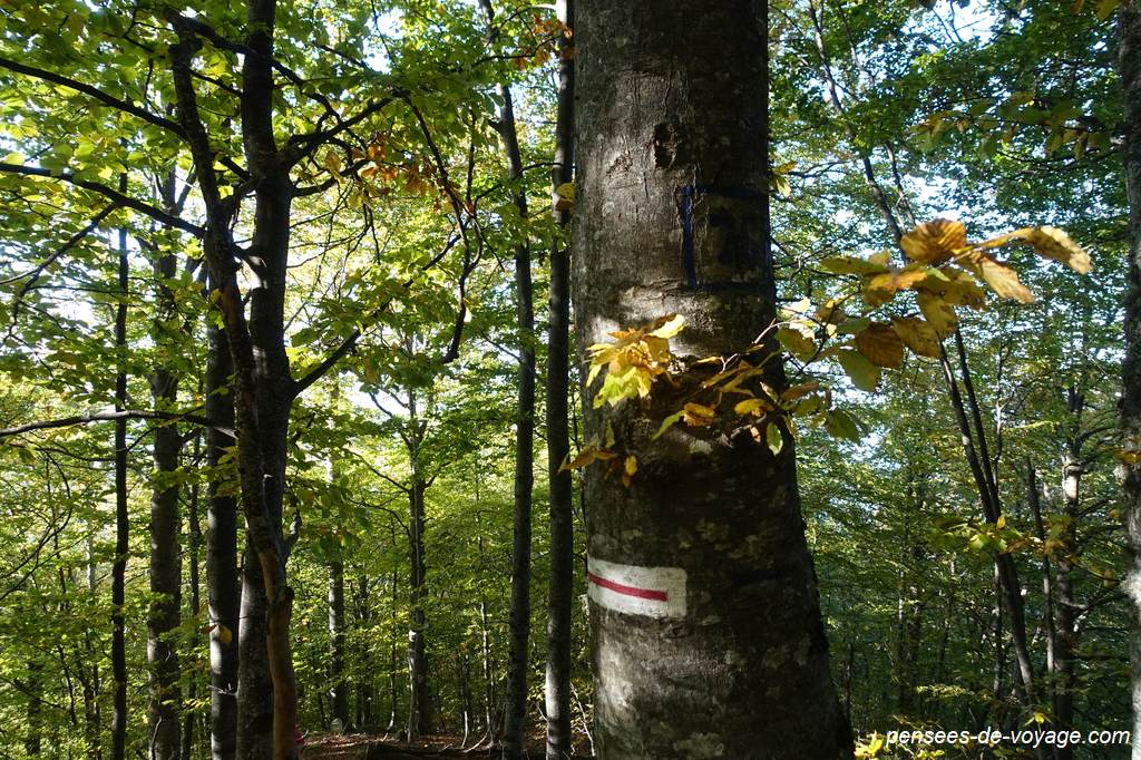 Marquage sur un arbre en forêt