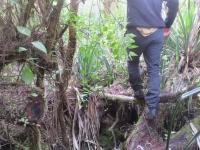 balade dans la jungle du parc  parc d'Ahuenco