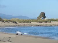 oiseaux et plage deserte sur chiloe