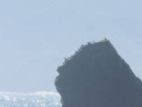 oiseaux sur un rocher chiloe