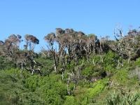 forêt dense de Chiloe