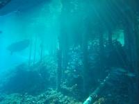 plongee fakarava poissons