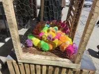 poussins colores multicolore pour la norouz