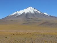 guanaco devant un volcan
